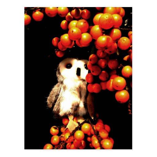 Seeing Orange Postcard