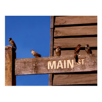 Seeking Direction Postcard