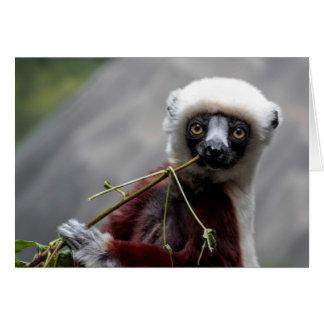 Sefaka Lemur Wildlife Animal Photo Card