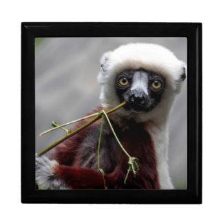 Sefaka Lemur Wildlife Animal Photo Trinket Box