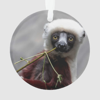 Sefaka Lemur Wildlife Animal Photo Ornament