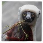 Sefaka Lemur Wildlife Animal Photo Tiles
