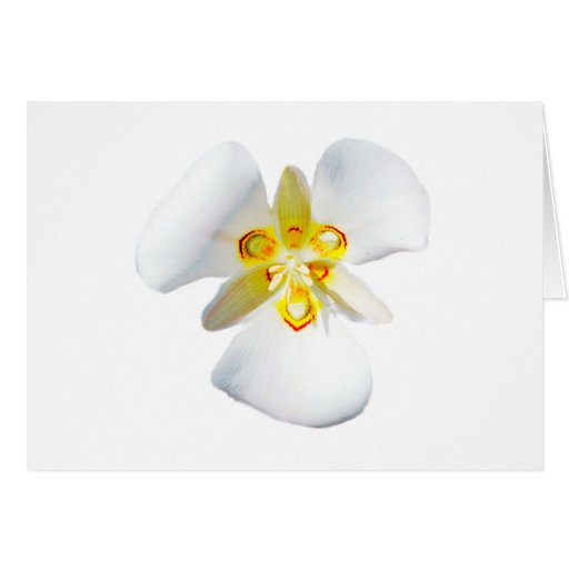 Sego Lilly Card