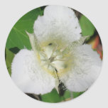 Sego Lily stickers