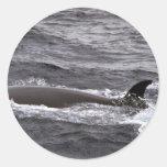 Sei whale stickers