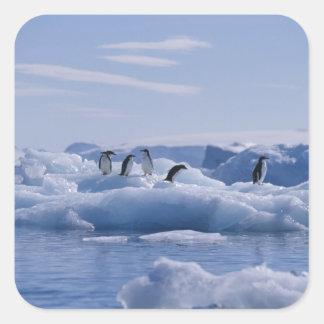 Seis adeliae del Pygoscelis de los pingüinos de Ad Calcomanía Cuadrada