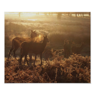 Seis ciervos comunes en la niebla de la mañana poster