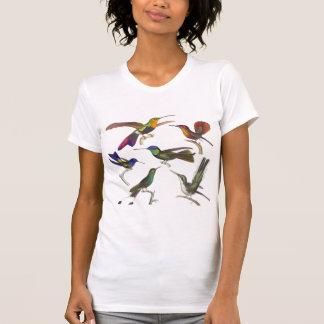 Seis colibríes coloridos - frente y parte playeras