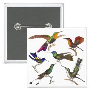 Seis diversos colibríes - lección de Rene Primever Pin