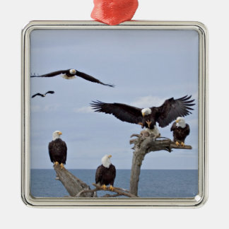 Seis Eagles calvos (leucocephalus del Haliaeetus) Adorno Cuadrado Plateado
