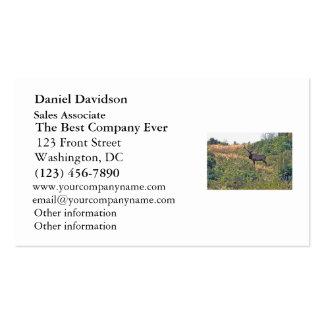 Seis fotos de los alces del punto tarjetas de visita
