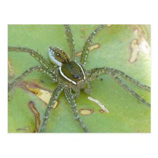 Seis-manchado pescando la postal de la araña