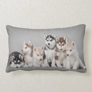 Seis perros esquimales cojines