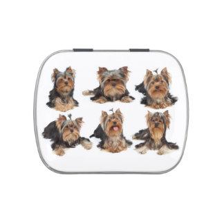 Seis perros latas de dulces