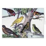 Seis postales coloridas Art. del vintage de los pá Felicitacion