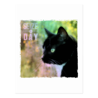 Seize the Day Cat Postcard