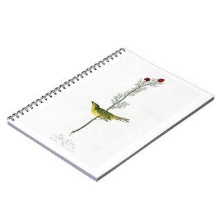 Selby's Flycatcher John Audubon Birds of America Notebook