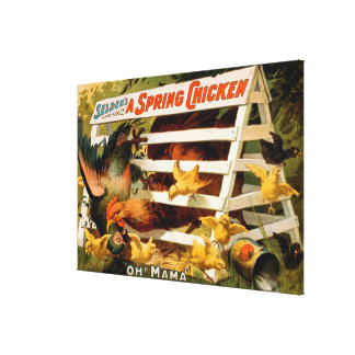 Selden's Funny Farce, A Spring Chicken Play Canvas Print