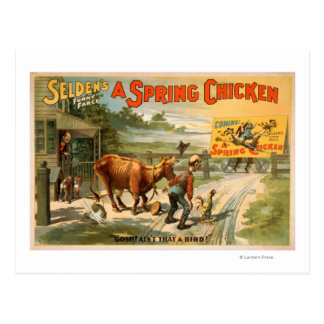 Selden's Funny Farce, A Spring Chicken Play Postcard