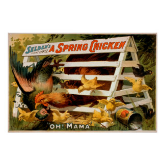 Selden's Funny Farce, A Spring Chicken Play Poster