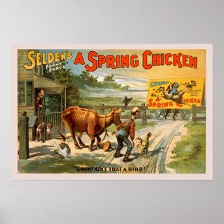Selden's Funny Farce, A Spring Chicken Poster