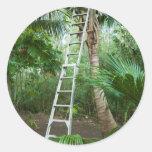 Selección de los cocos frescos