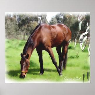 Selección del verde del caballo de bahía poster