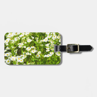 Selective focus of green field luggage tag