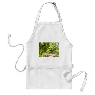 Selective focus on a young branch of a tree with l adult apron