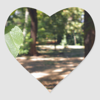 Selective focus on a young branch of a tree with l heart sticker