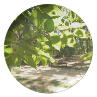Selective focus on a young branch of a tree with l melamine plate