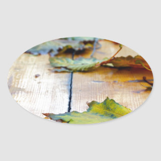 Selective focus on autumn maple leaves with shallo oval sticker