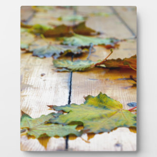 Selective focus on autumn maple leaves with shallo plaque