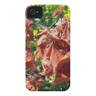Selective focus on maple branch with dried leaves iPhone 4 case