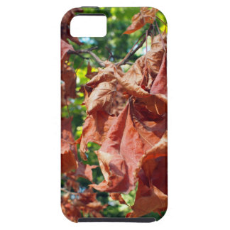 Selective focus on maple branch with dried leaves iPhone SE/5/5s case