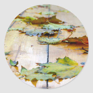 Selective focus on the autumn fallen maple leaves classic round sticker