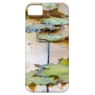 Selective focus on the autumn fallen maple leaves iPhone SE/5/5s case