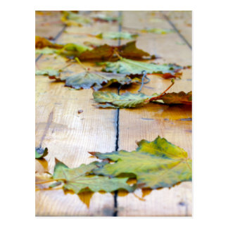 Selective focus on the autumn fallen maple leaves postcard