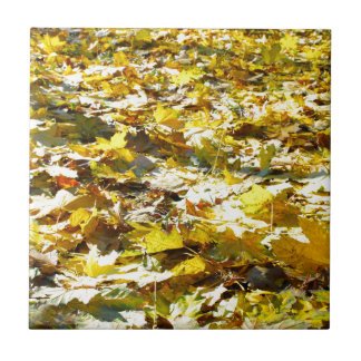 Selective focus on the yellow fallen autumn maple tile