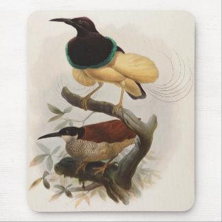 Seleucides alba - Twelve Wire Bird Of Paradise Mouse Pad