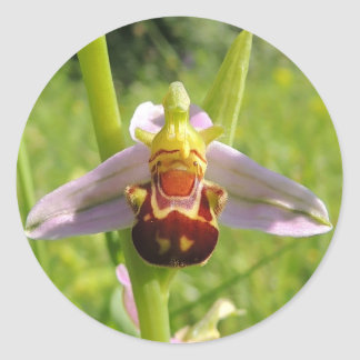 """Self-adhesive """"Ophrys """""""