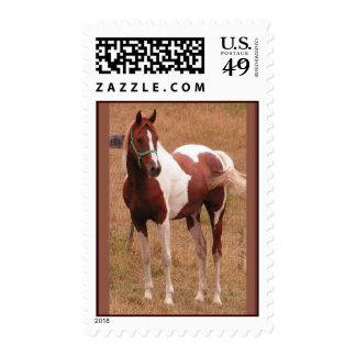 Sello 1 de USPS del caballo del Pinto