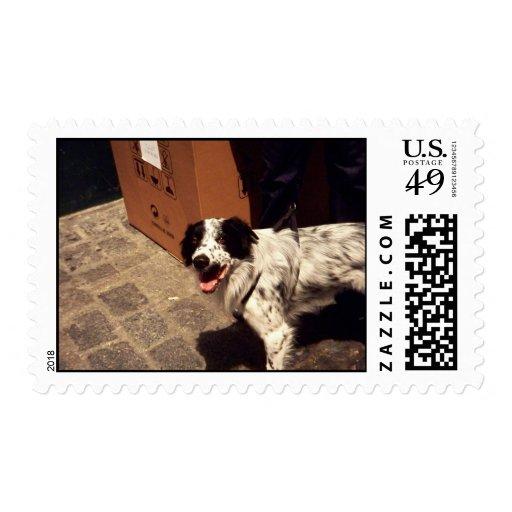 sello 3 del perro