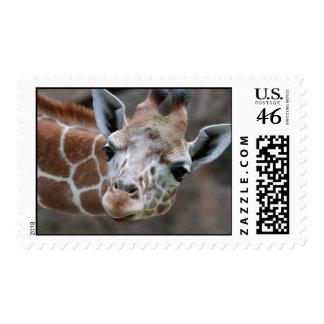 Sello adorable de la jirafa