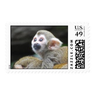 Sello adorable del mono de ardilla