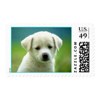 sello adoreable del perro