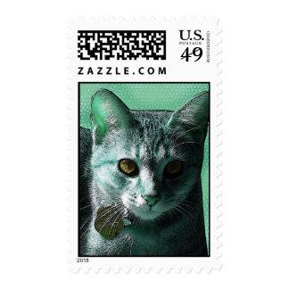 sello Aguamarina-verde y Naranja-observado del gat