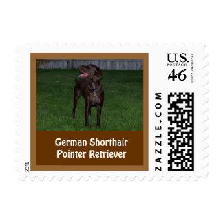 Sello alemán del perro perdiguero del indicador de