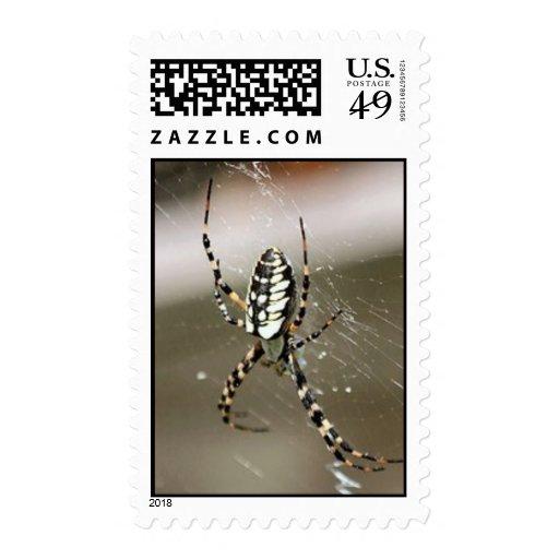 Sello amarillo de la araña del tejedor del orbe de