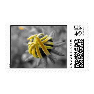 Sello amarillo de la flor